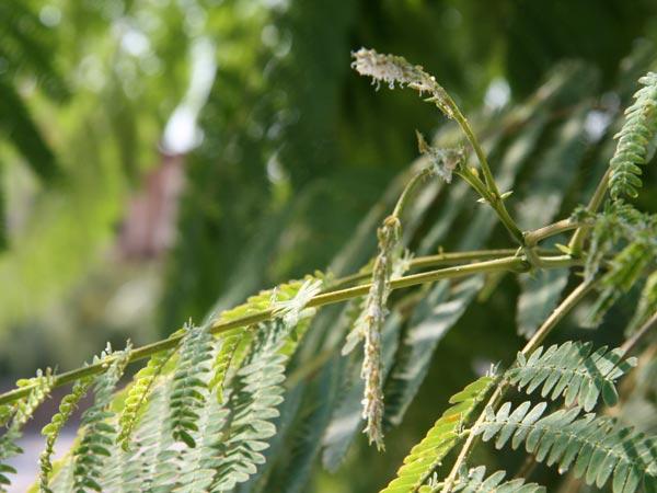 Riducono-attivita-fotosintetica