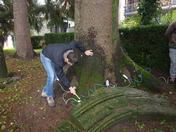 Visual-Tree-Assessment