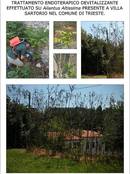 Come-eliminare-piante-rampicanti-selvatiche