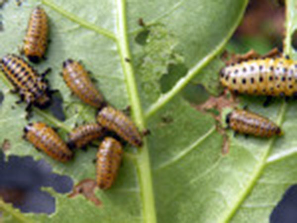Lotta-anobidi-nocivi-per-piante