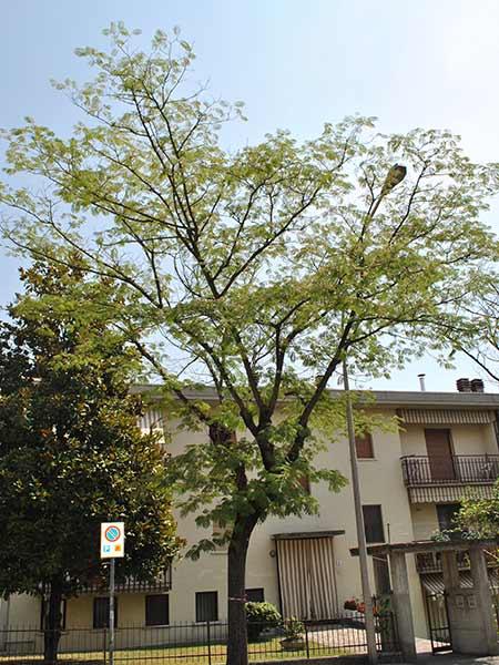 Macchie-foglie-quercia-leccio