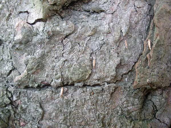 Sistemi-antiparassitari-lepidotteri