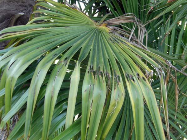 Lotta-larve-piante-ornamentali